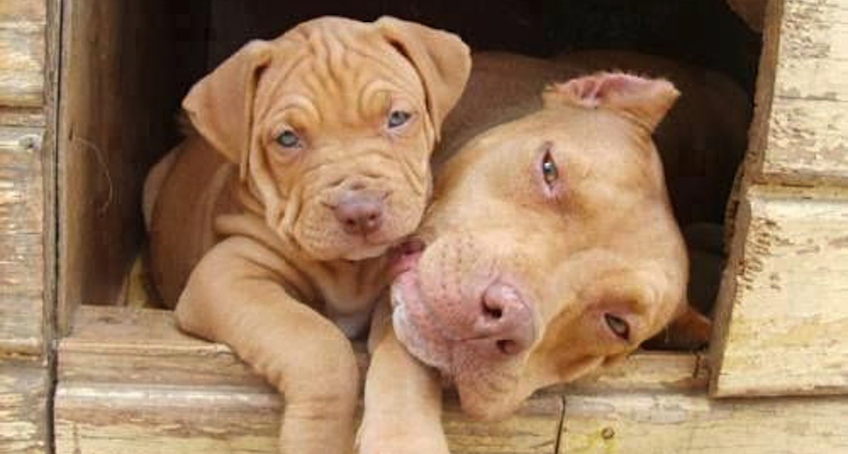 The Proof That Pit Bull Mommies Are As Loving As We Are!