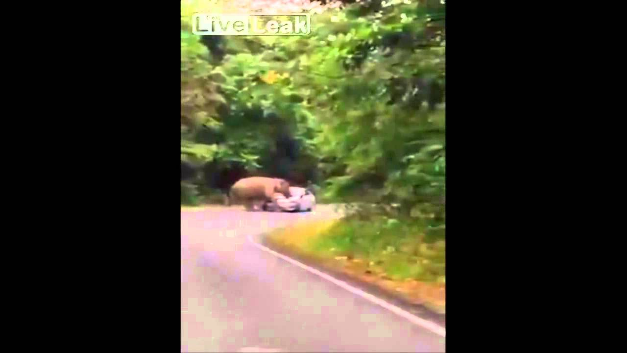 Elephant makes car a sitting experiment