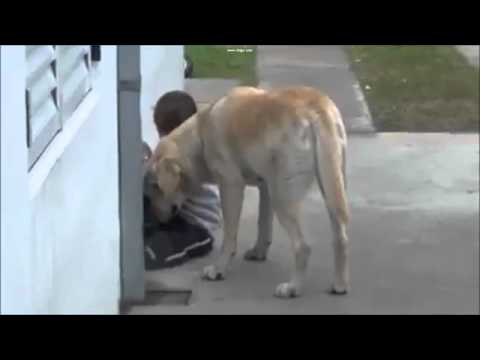 How this dog takes care of this… special boy
