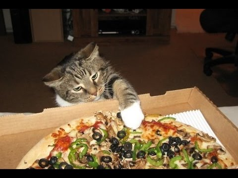 Cats, the pizza burglars!!!