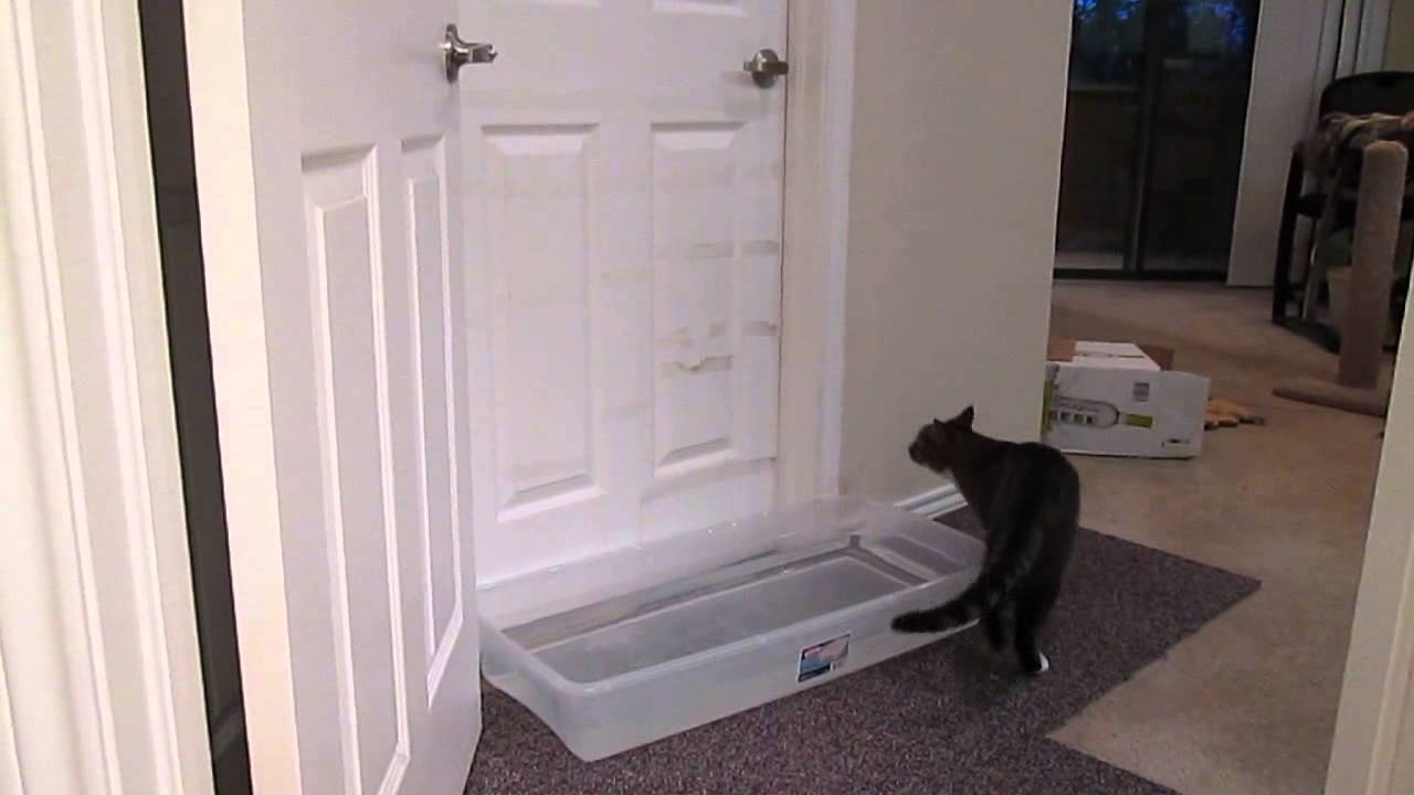 Mulder, the door opening cat