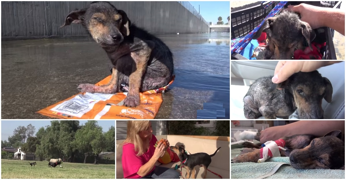 The awesome rescue of a puppy who was thrown into the river