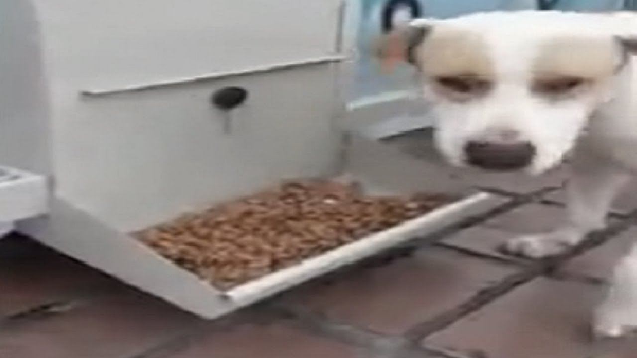 Good food for homeless dogs!