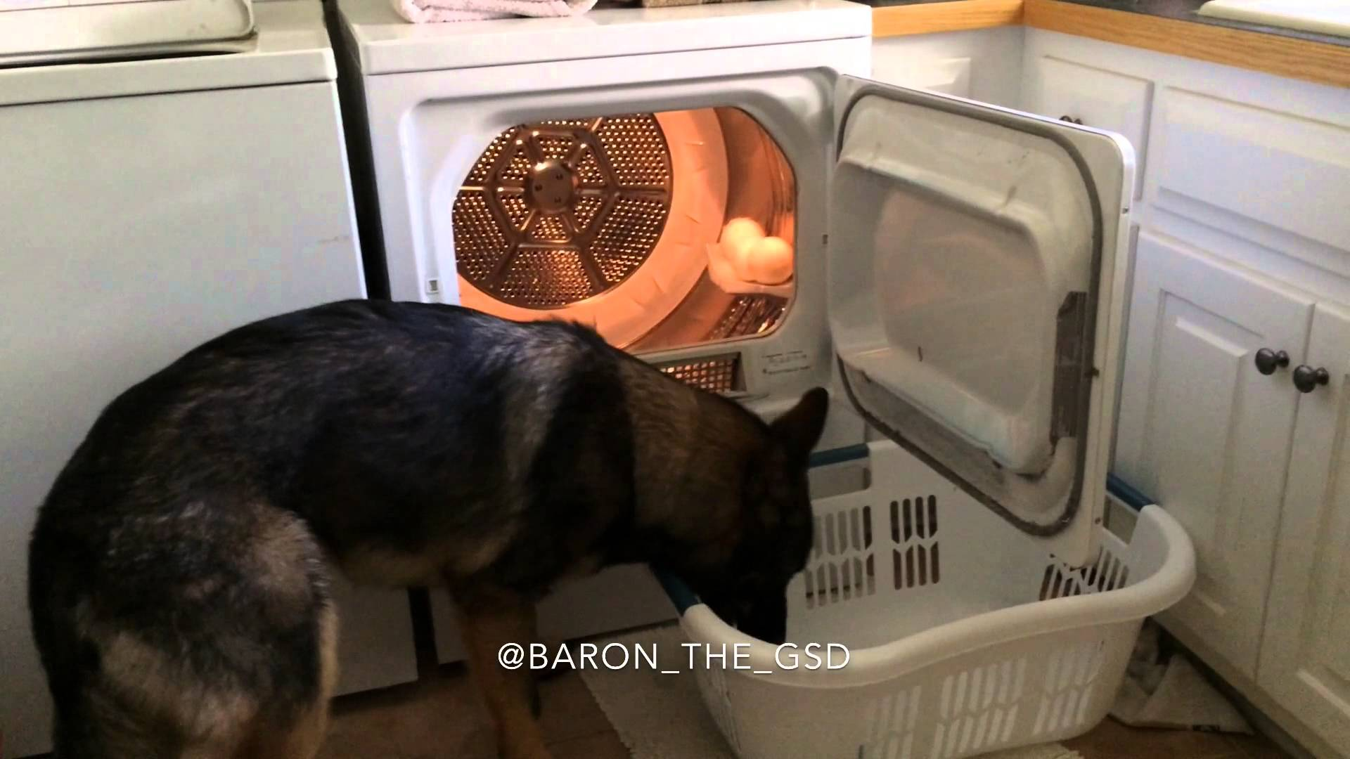 Baron, the German Shepherd housekeeper