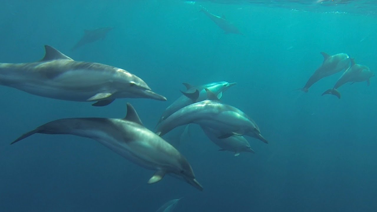 The unique bond that dolphins have with humans