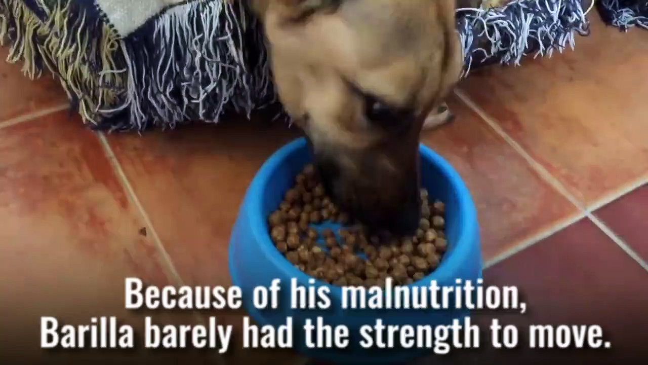 This Dog's Recovery Is Amazing