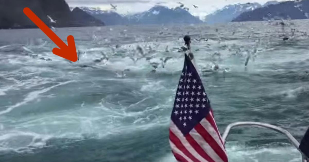 This man was filming the birds on his boat trip but what the camera recorded on 0:57 made his jaw drop in awe!