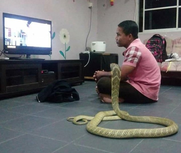 Man marries a 10ft COBRA because he believes is his reincarnated girlfriend!