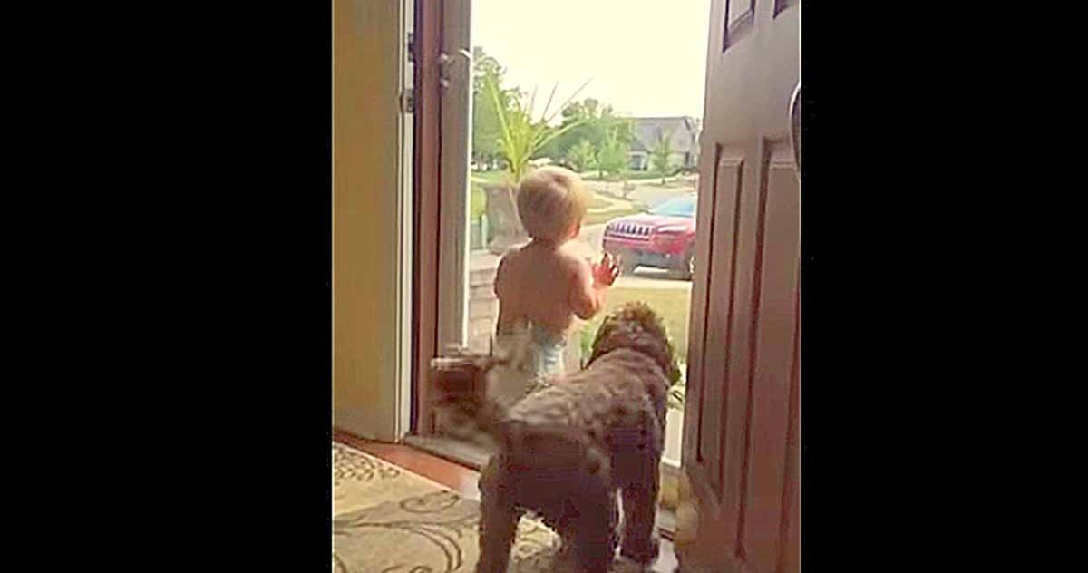 Daddy Just Got Home, Mom's Footage Of Baby And Dog Goes Viral