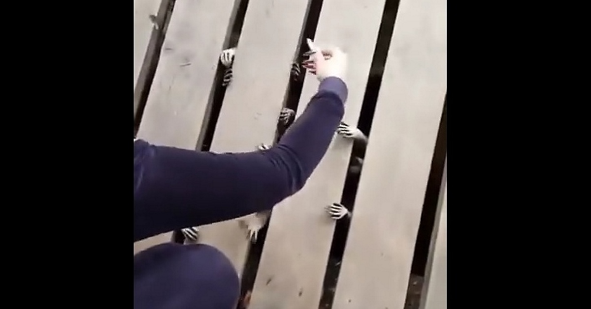 Woman Hears Sounds Under A Deck, Discovers Creepy Infestation