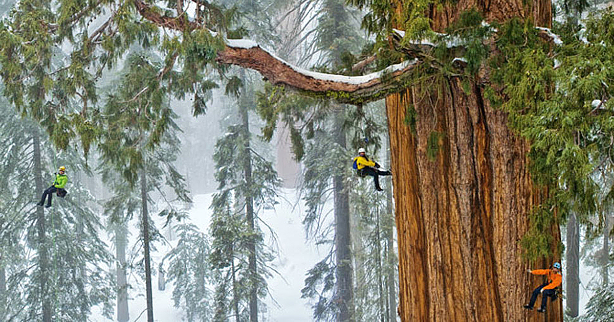 This 3,200-Year-Old Tree Is So Big, It's Never Been Captured In A Single Photograph… Until Now